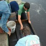 Board Members, Scott Dawson and Charles Williams, with CAS Member Warren McMaster... wet sieving.